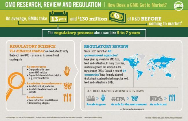 GMO regulation